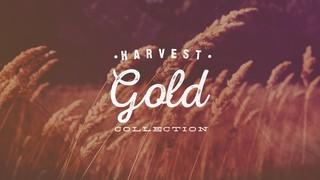 Harvest Gold