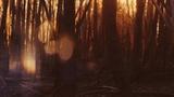Autumn Dream Forest