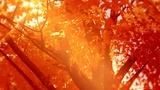 Autumn Oasis Fall