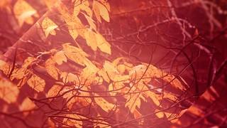 Autumn Oasis Leaves