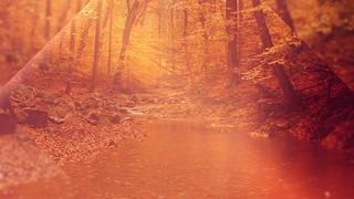 Autumn Oasis Stream