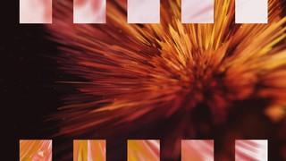 Beautiful Disruption Flower Alt