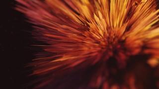 Beautiful Disruption Flower