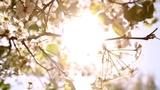 Bloom Tree (Stills)