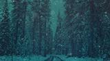 Christmas Cheer Forest (Stills)