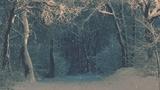 Christmas Ribbon Blue Snow (Motions)