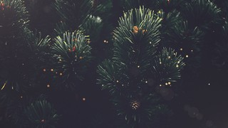 Christmas Textures Pine