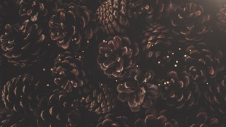 Christmas Textures Pinecones