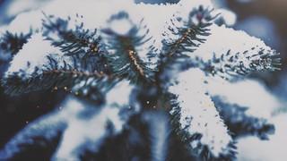 Christmas Textures Snow Pine