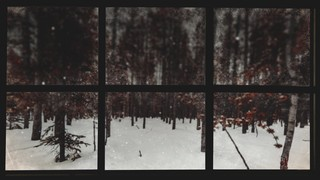 Christmas Windows 4