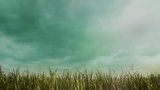 Deep Autumn Cornfield (Motions)