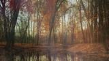Deep Autumn Pond (Motions)