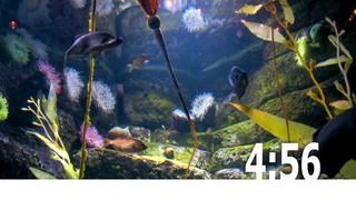 Fish Tank Countdown 1