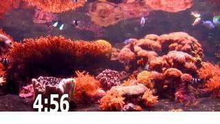 Fish Tank Countdown 2