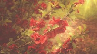 Fresh Flowers Long Play