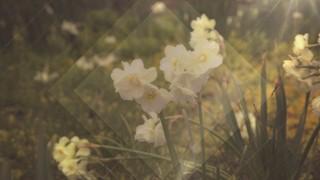 Fresh Flowers White