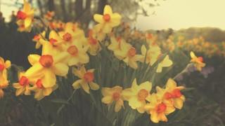 Fresh Flowers Yellow