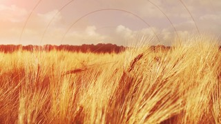 Golden Hour Grain Radial