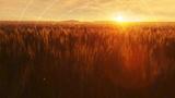 Golden Hour Sunset Radial