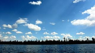 Horizon Forrest