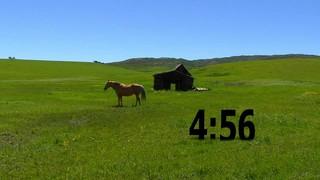 Horse Countdown
