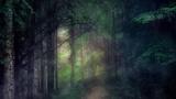 Last Light Woods (Motions)