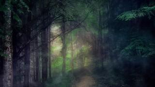 Last Light Woods