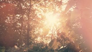 Leafy Sunshine