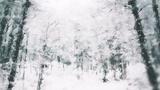 Let It Snow Tromping (Stills)