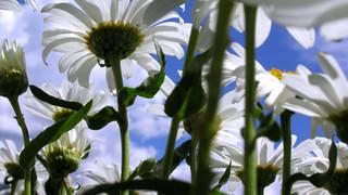 Low Angle Flowers