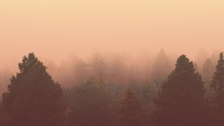 Misty Forest Hazy