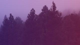 Misty Forest Purple