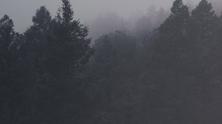 Misty Forest Silver