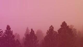 Misty Forest Sunrise