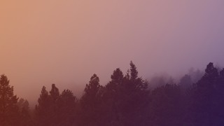 Misty Forest Sunset