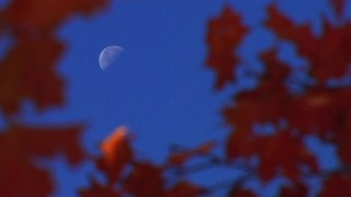 Moon And Leaves