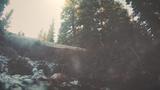 Mountain Hike Stream