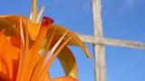 Orange Flower Cross