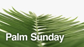 Palm Sunday White