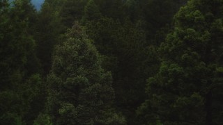 Psalm 36 Forest