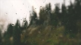 Rainy Day Forest (Motions)