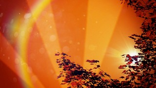 Red Leaf Rays