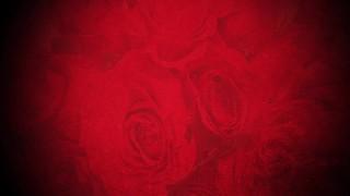Roses Flicker