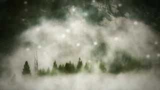 Silent Forest Fog