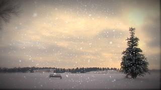 Small Pine Snow