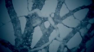 Snow Past Tree