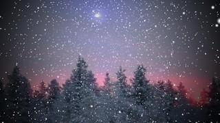 Snow Pines 1