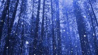 Snow Pines 2