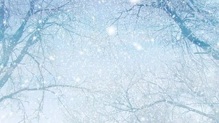 Snowing Through Trees