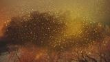 Snowy Night Gold